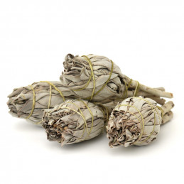 Biała szałwia (pęk 10-14g) kadzidło oczyszczające (White Sage / SALVIA APIANA)