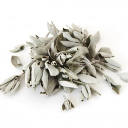 Biała szałwia (susz 100g) White Sage / SALVIA APIANA