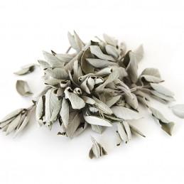 Biała szałwia (susz 25g) White Sage / SALVIA APIANA / kadzidło oczyszczające