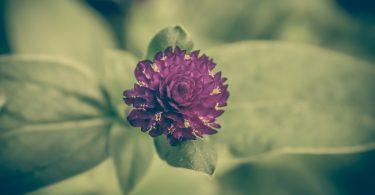 Rośliny magiczne